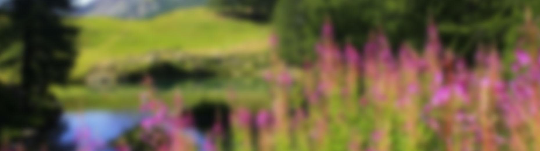 paisatge-juny