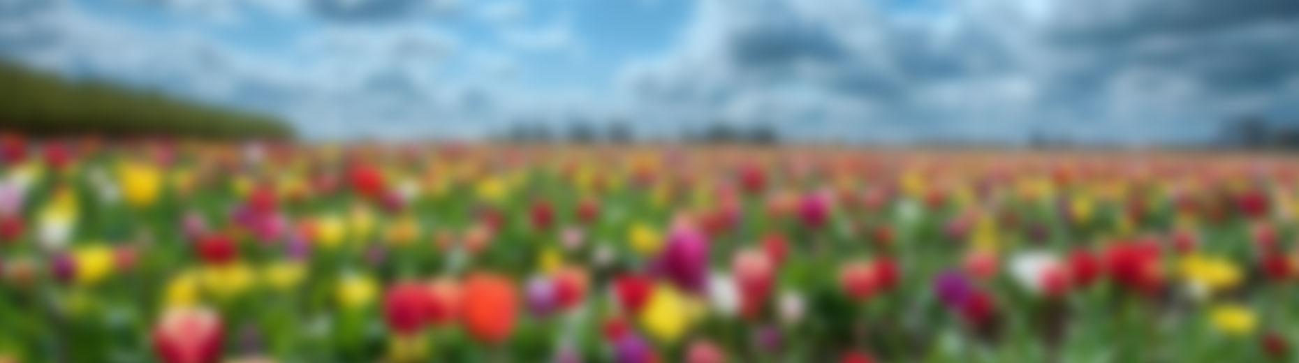 paisatge-maig